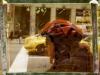 NY-08May-032