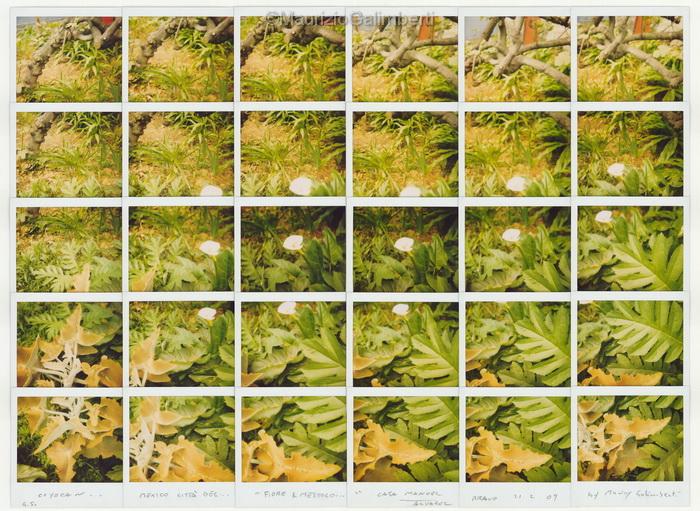 41_Casa-di-M.A.Bravo_fiore-e-mestolo_21-02-2009