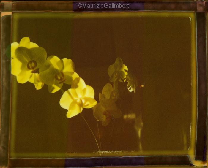 Orchidee-001