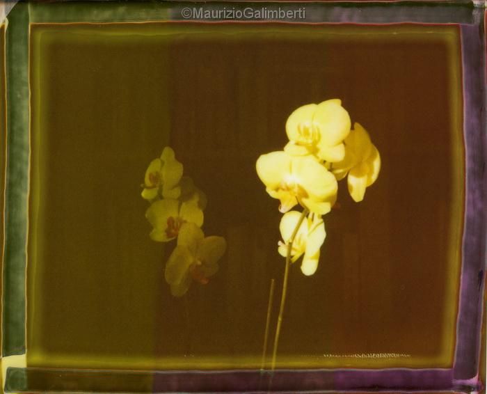 Orchidee-003