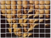 ChuckClose-NY20100121